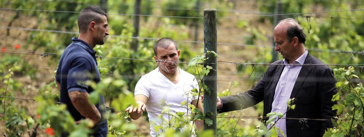 Lamberto Frescobaldi visits the family's vineyard on the prison island of Gorgona